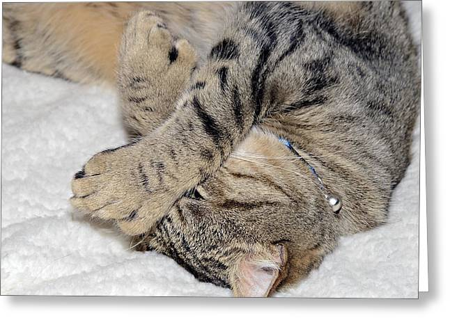 Let Me Sleep Greeting Card by Susan Leggett