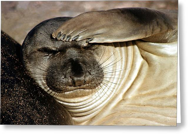 Elephant Seals Greeting Cards - Let me think... Greeting Card by Cliff Wassmann