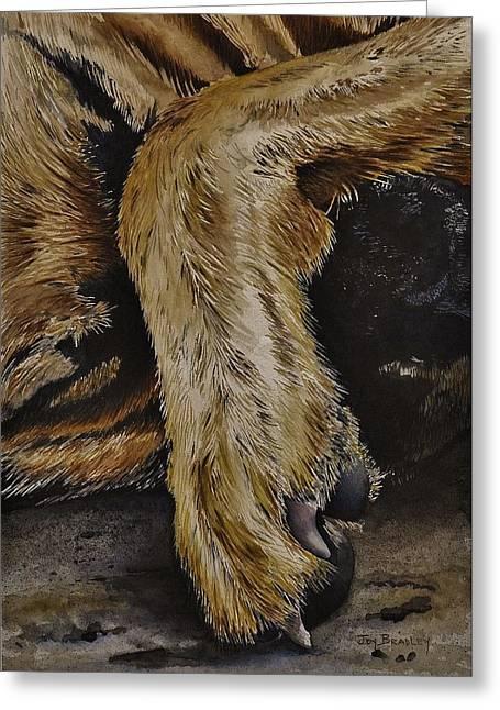 Let Sleeping Dogs Lie Greeting Card by Joy Bradley