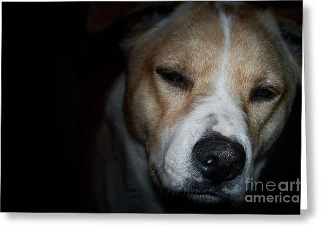 Let sleeping dogs lie. Greeting Card by Tim Kravel