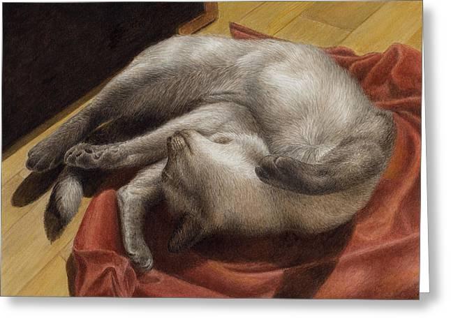 Siamese Cat Greeting Cards - Let Sleeping Kitties Lie Greeting Card by Pat Erickson