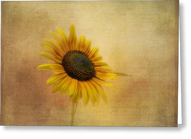 Yellow Sunflower Greeting Cards - Let the Sun Shine In Greeting Card by Kim Hojnacki