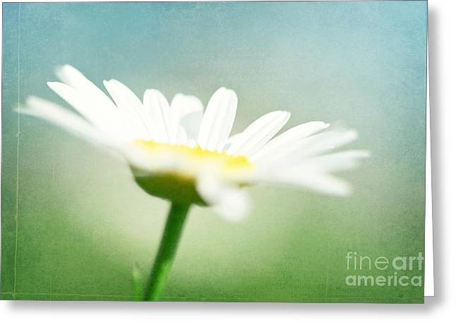 Bathroom Prints Greeting Cards - Let The Sunshine In Greeting Card by Kim Fearheiley