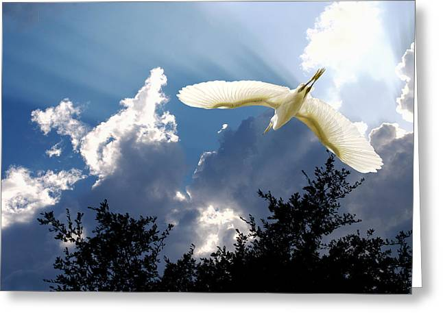 Water Fowl Greeting Cards - Let There Be Light Greeting Card by Roy Williams