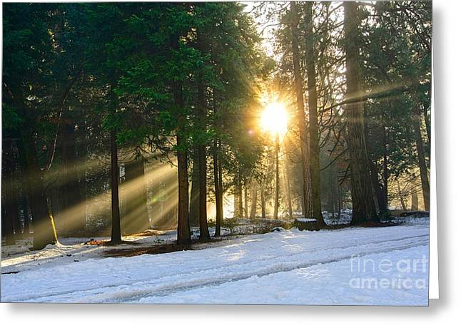 Burst Greeting Cards - Let There Be Light - Sun beams pouring through a forest scene. Greeting Card by Jamie Pham