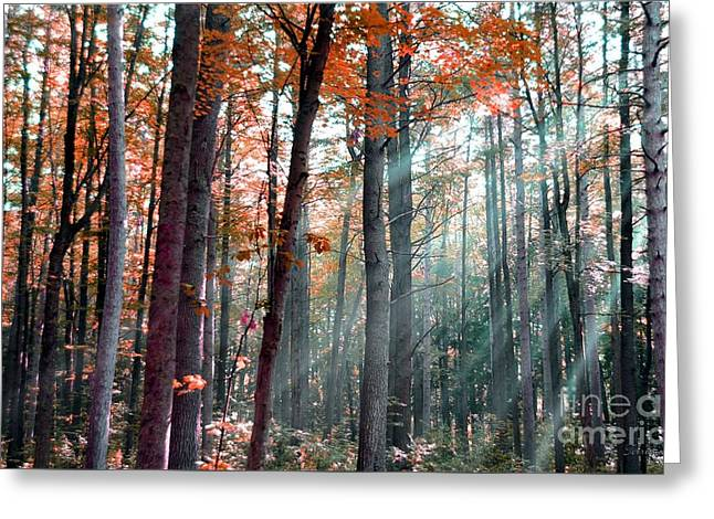 Let There Be Light Greeting Card by Terri Gostola