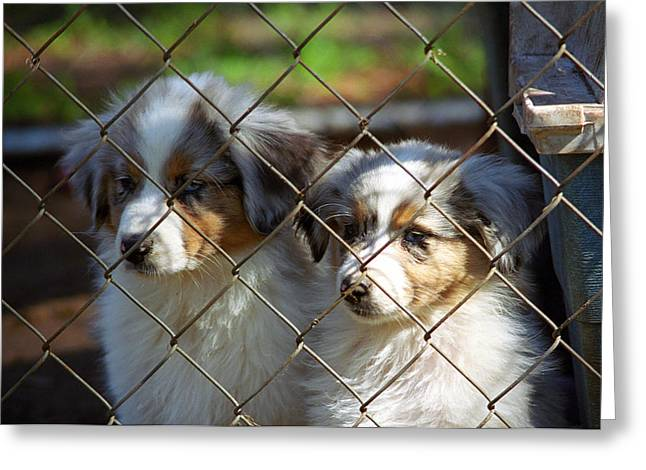 Dejected Greeting Cards - Let Us Out #1 Greeting Card by Frank Romeo