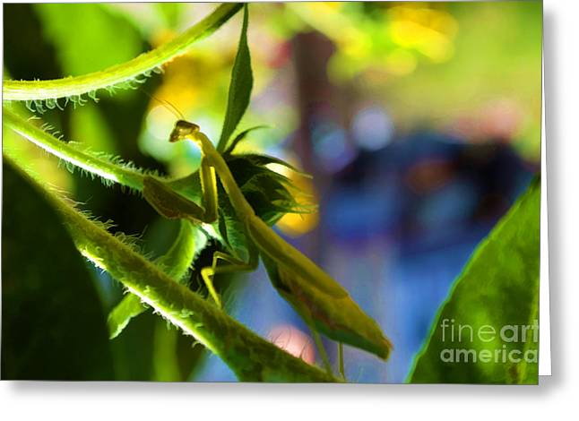 Invertebrates Greeting Cards - Insect - Let Us Prey - Luther Fine Art Greeting Card by Luther   Fine Art