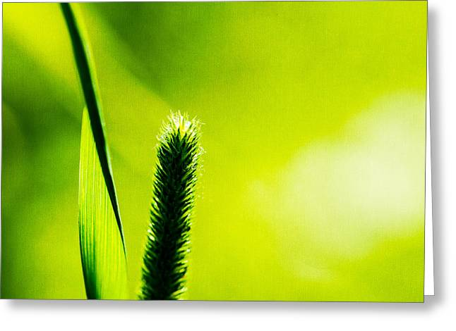 Herbage Greeting Cards - Let World Be Green Greeting Card by Alexander Senin