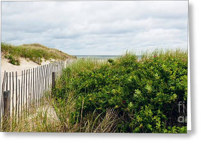 Beach Roses Greeting Cards - Let Your Cares Go Greeting Card by Michelle Wiarda