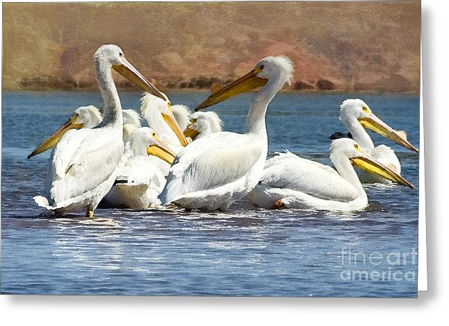 American White Pelican (pelecanus Erythrorhynchos) Greeting Cards - Lets Blow This Joint Greeting Card by Betty LaRue