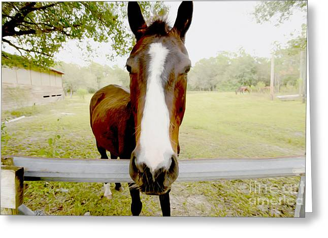 Farm Horse Greeting Cards - Lets go for a Ride Greeting Card by Jon Neidert