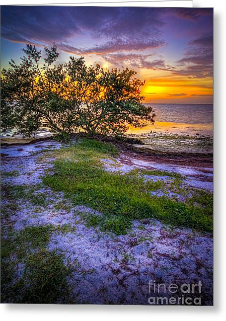 Mangrove Trees Greeting Cards - Lets Keep Looking Greeting Card by Marvin Spates