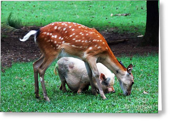 Charlotte Framed Art Greeting Cards - Lets Pig Out Greeting Card by B Wayne Mullins