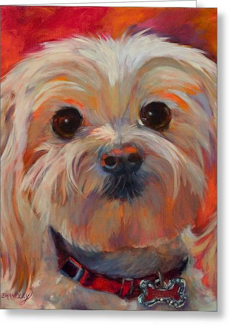 Maltese Greeting Cards - Lets Play Greeting Card by Chris Brandley