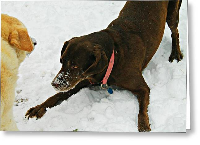 Chocolate Lab Greeting Cards - Lets Play Greeting Card by Vicki Dreher