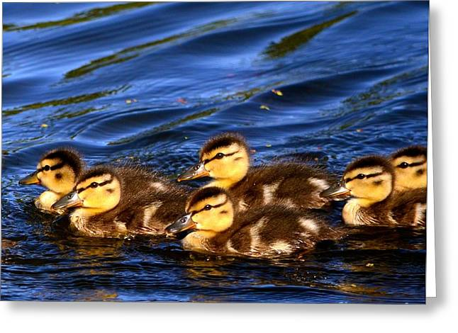 The Nature Center Greeting Cards - Lets Stick Together Greeting Card by Johanne Peale