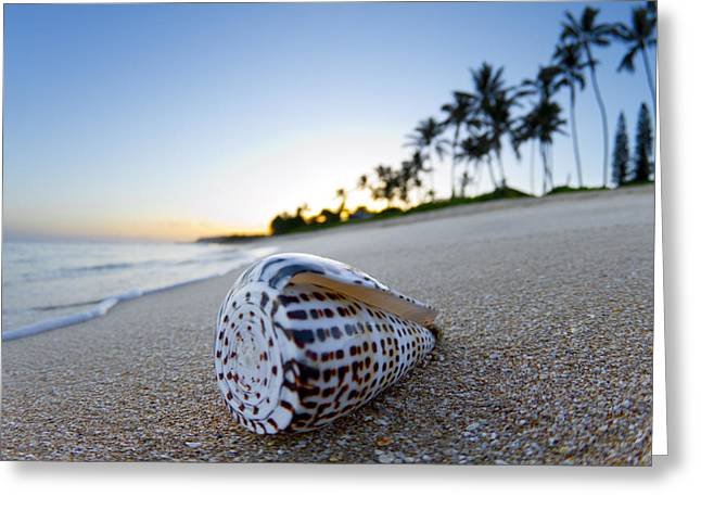 Coconut Trees Greeting Cards - Letter Cone Sunrise Greeting Card by Sean Davey