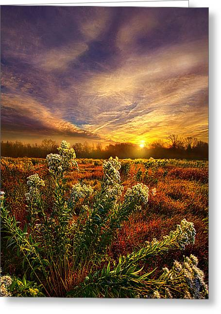 Fall Trees Greeting Cards - Letting Go Greeting Card by Phil Koch