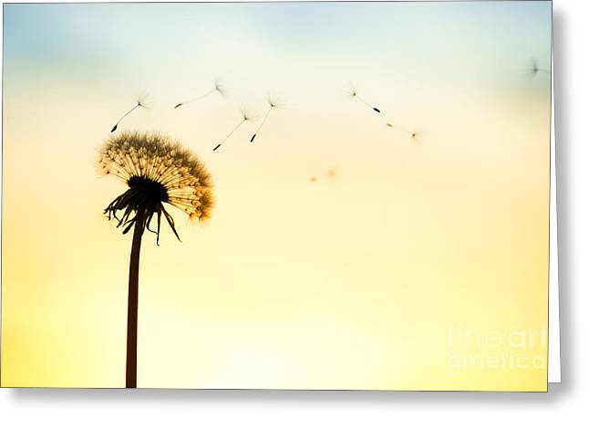 Feathery Greeting Cards - Letting Go Greeting Card by Tim Gainey