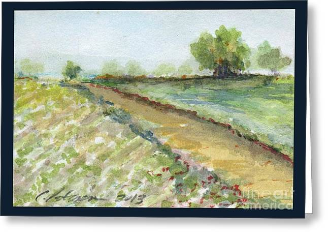Lettuce Field Greeting Card by Cathy Peterson