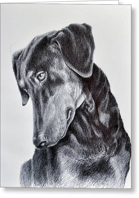 Working Dog Drawings Greeting Cards - Lexys Look Greeting Card by Rick Hansen