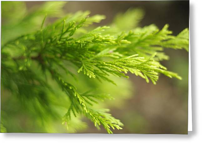 Specialty Greeting Cards - Leyland Cypress Golconda Greeting Card by Rebecca Sherman
