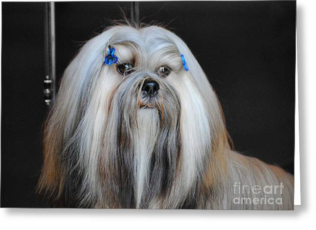 Dog Photo Greeting Cards - Lhasa Apso Greeting Card by Jai Johnson