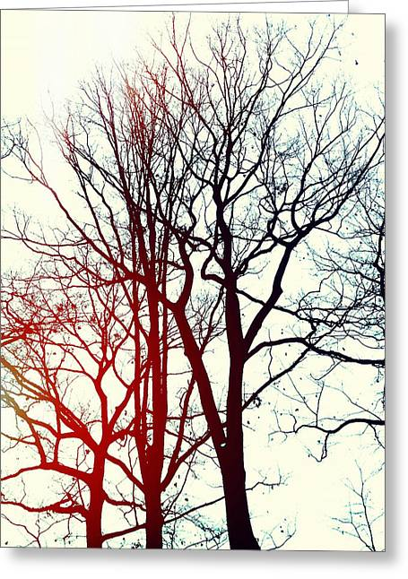 Bare Trees Digital Art Greeting Cards - LHiver Greeting Card by Natasha Marco
