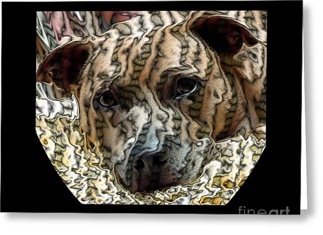 Apbt Greeting Cards - Li Ti Dog Greeting Card by Renee Trenholm