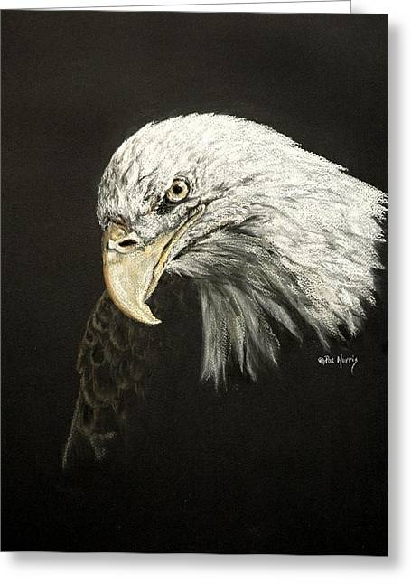 Bald Eagle Pastels Greeting Cards - Lia Greeting Card by Pat Morris