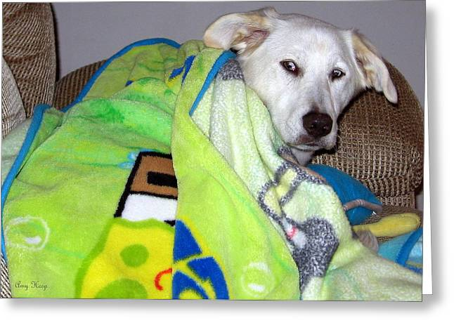 Mixed Labrador Retriever Greeting Cards - Liberty the Dog with Her SpongeBob Blanket Greeting Card by Amy Hosp