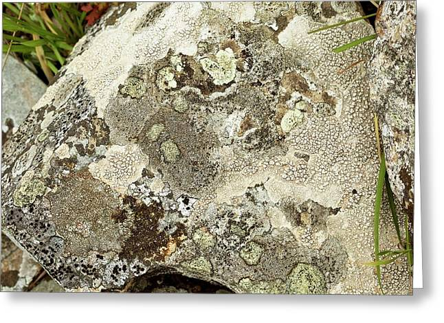 Lichen-covered Rock Greeting Card by Bob Gibbons