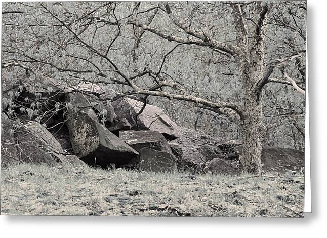 Lichen Covered Trees Greeting Cards - Lichen Covered Tree and Rockpile in the Missouri Ozarks Greeting Card by Greg Matchick