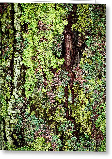 Colorful Bark Greeting Cards - Lichen Greeting Card by Elena Elisseeva