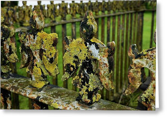 Lichen On Iron Railings In Unpolluted Air Greeting Card by Cordelia Molloy