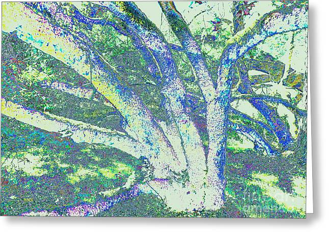 Pictures Of Lichens Greeting Cards - Lichen Tree Negative Greeting Card by Raphael OLeary