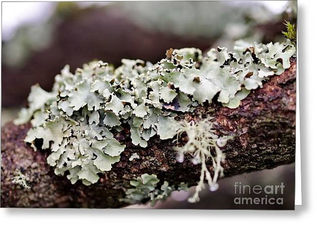 My Ocean Greeting Cards - Lichens 3 Greeting Card by   FLJohnson Photography