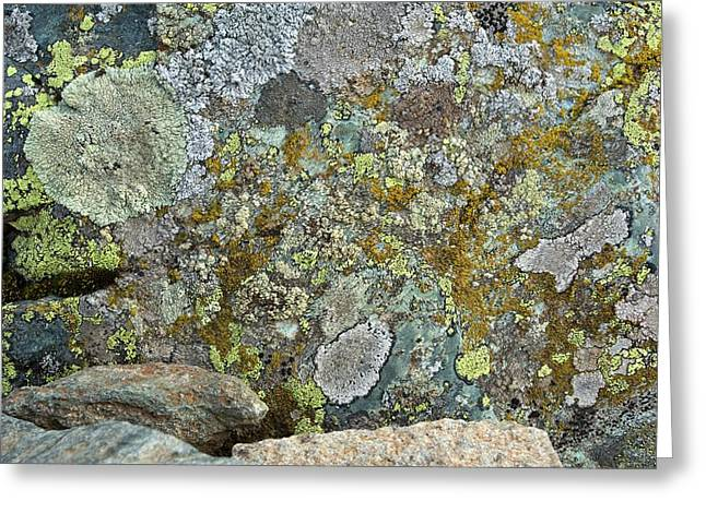 Lichens On A Rock Greeting Card by Bob Gibbons