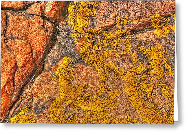 Orange And Brown Designs Greeting Cards - Lichens on the Shoreline Rocks 1 Greeting Card by Gill Billington