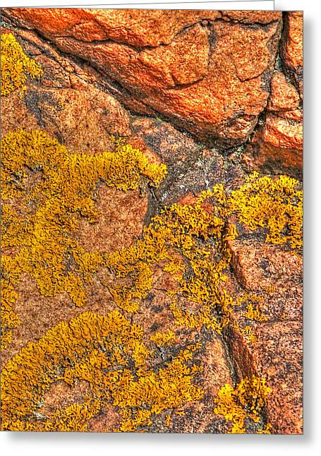 Gills Rock Greeting Cards - Lichens on the Shoreline Rocks 2 Greeting Card by Gill Billington