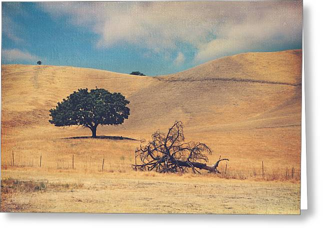Dead Tree Greeting Cards - Life and Death Greeting Card by Laurie Search
