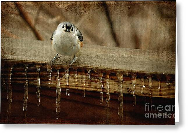 Tufted Titmouse Greeting Cards - Life Can Be Tough Greeting Card by Lois Bryan