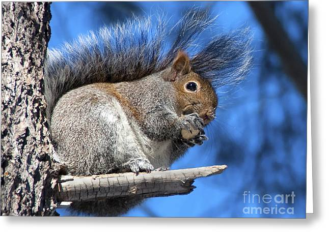 Blue Tail Greeting Cards - Life could be worse... Greeting Card by Nina Stavlund