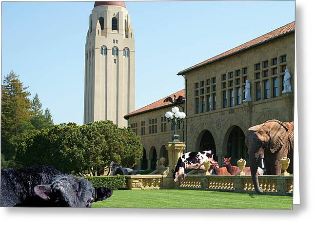Pig Digital Greeting Cards - Life Down On The Farm Stanford University California Square DSC685 Greeting Card by Wingsdomain Art and Photography