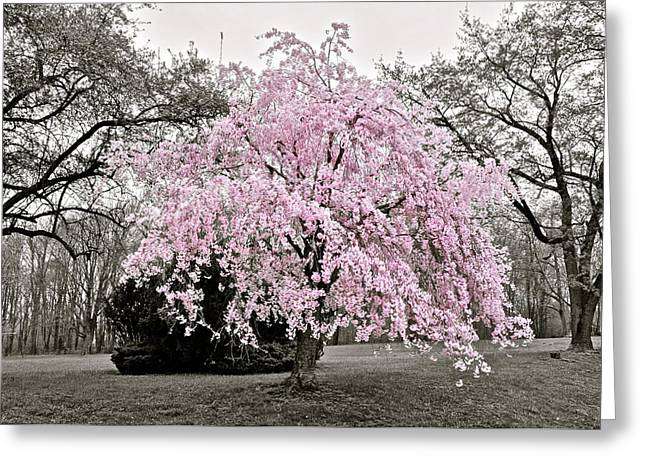 Wow Greeting Cards - Life Eternal Greeting Card by Frozen in Time Fine Art Photography