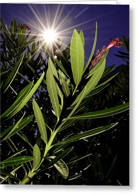 Caost Greeting Cards - Life Force Greeting Card by Elbe Photography