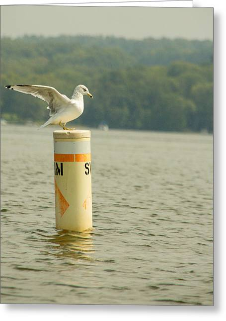 Lone Gull Greeting Cards - Life Guard on Duty 2 Greeting Card by Calypso Pictures
