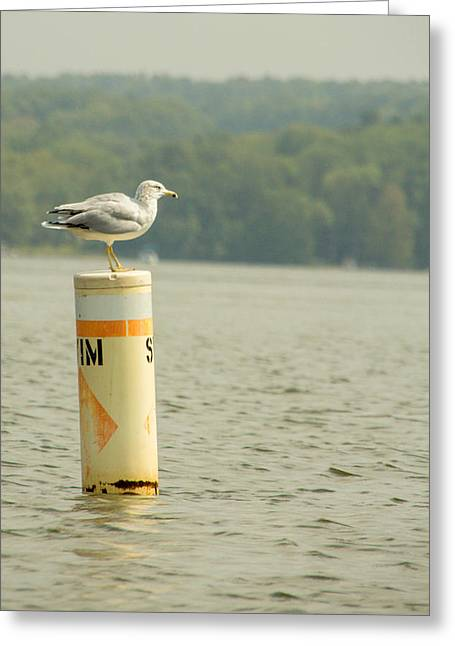 Lone Gull Greeting Cards - Life Guard on Duty Greeting Card by Calypso Pictures