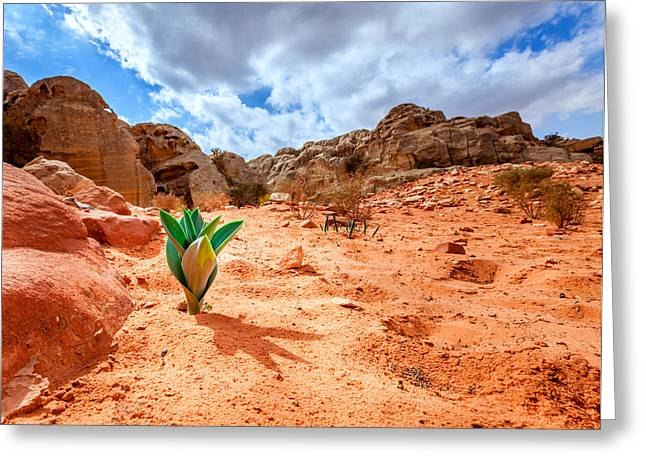 Petra Greeting Cards - Life in the desert Greeting Card by Alexey Stiop